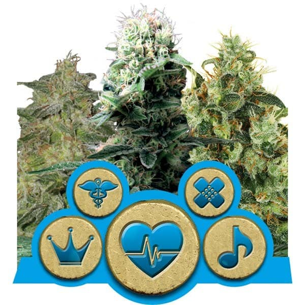 Buy CBD Mix Cannabis Seeds from Royal Queen Seeds online at HollandsHigh! Fast & Discrete worldwide shipping!