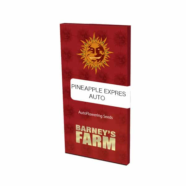 Buy Pineapple Express Auto Barneys Farm at Holland's High Fast & Discrete Worldwide Shipping!