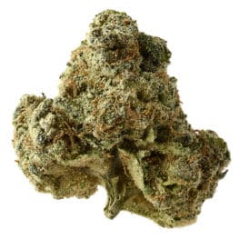 Buy AK OG Kush cannabis seeds from Amsterdam Genetics online at HollandsHigh!