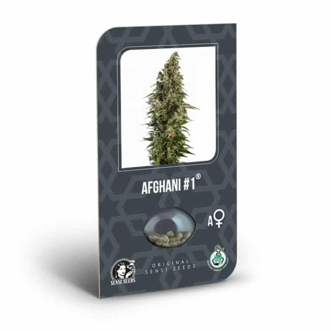 Buy Afghani #1 Automatic Feminized Autoflowering Cannabis Seeds from Sensi Seeds online at HollandsHigh! Fast & Discrete worldwide shipping!