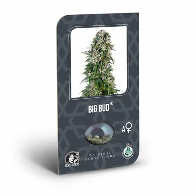 Buy Big Bud Auto Feminized Autoflowering Cannabis Seeds from Sensi Seeds online at HollandsHigh! Fast & Discrete worldwide shipping! Order your seeds here!