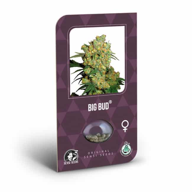 Buy Big Bud Feminized Cannabis Seeds from Sensi Seeds online at HollandsHigh! Fast & Discrete worldwide shipping! Check out all our Sensi strains!