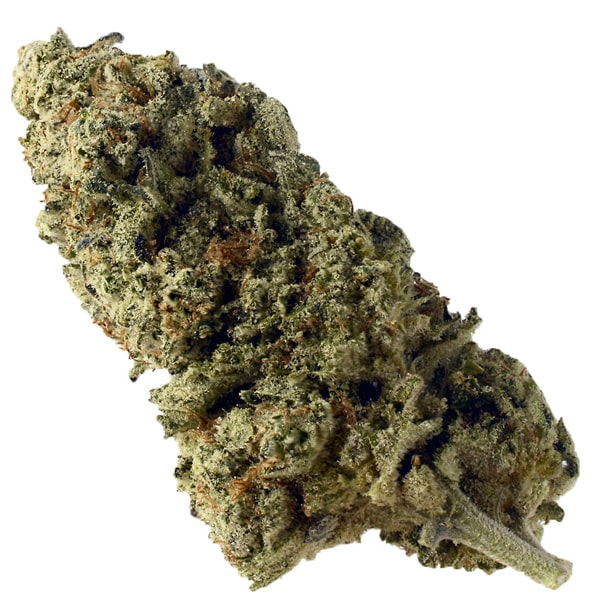 Buy Green Magic cannabis seeds from Amsterdam Genetics online at HollandsHigh!