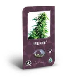 Buy Hindu Kush Feminized Cannabis Seeds from Sensi Seeds online at HollandsHigh! Fast & Discrete worldwide shipping! Check out all our Sensi strains!