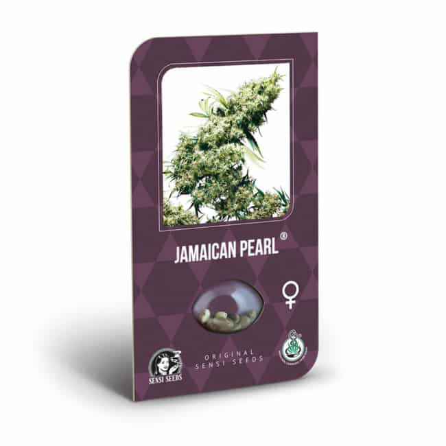 Buy Jamaican Pearl Feminized Cannabis Seeds from Sensi Seeds online at HollandsHigh! Fast & Discrete worldwide shipping! Check out all our Sensi strains!