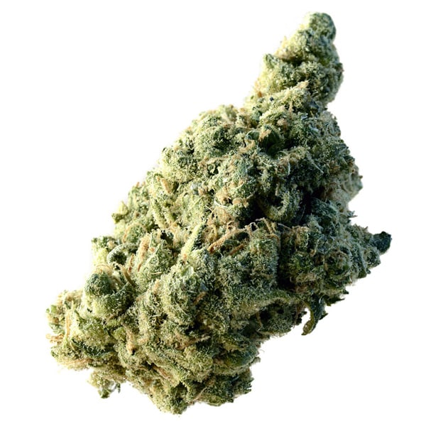 Buy Lemon Ice cannabis seeds from Amsterdam Genetics online at HollandsHigh!