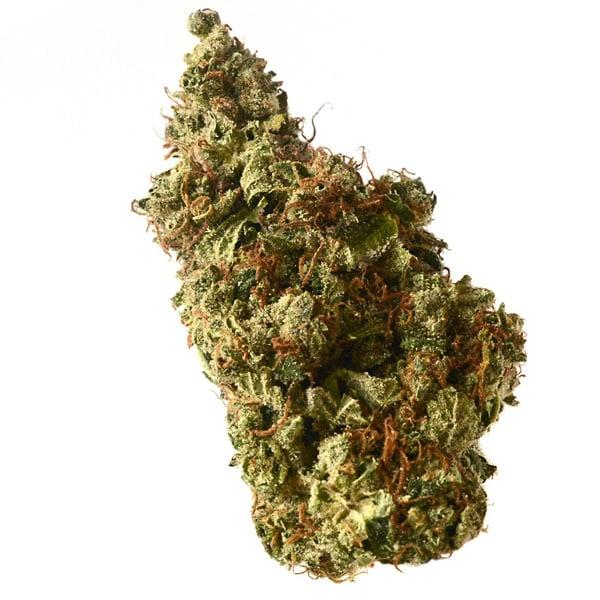Buy Milkshake Kush Autoflower cannabis seeds from Amsterdam Genetics online at HollandsHigh!