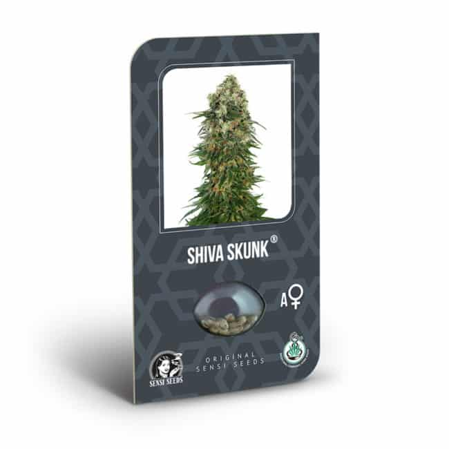 Buy Shiva Skunk Automatic Feminized Autoflowering Cannabis Seeds from Sensi Seeds online at HollandsHigh! Fast & Discrete worldwide shipping!