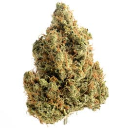 Buy Strawberry Glue cannabis seeds from Amsterdam Genetics online at HollandsHigh!