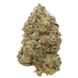 Buy Tangerine G13 cannabis seeds from Amsterdam Genetics online at HollandsHigh!