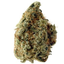 Buy White Choco cannabis seeds from Amsterdam Genetics online at HollandsHigh!
