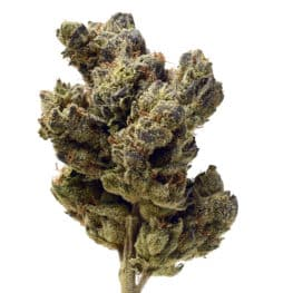 Buy Blue Magic cannabis seeds from Amsterdam Genetics online at HollandsHigh!