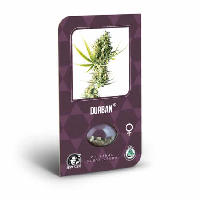 Buy Durban Feminized Cannabis Seeds from Sensi Seeds online at HollandsHigh! Fast & Discrete worldwide shipping! Check out all our Sensi strains!