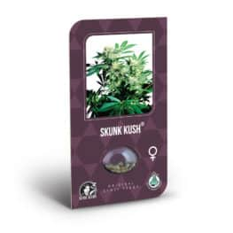 Buy Skunk Kush Feminized Cannabis Seeds from Sensi Seeds online at HollandsHigh! Fast & Discrete worldwide shipping! Check out all our Sensi strains!