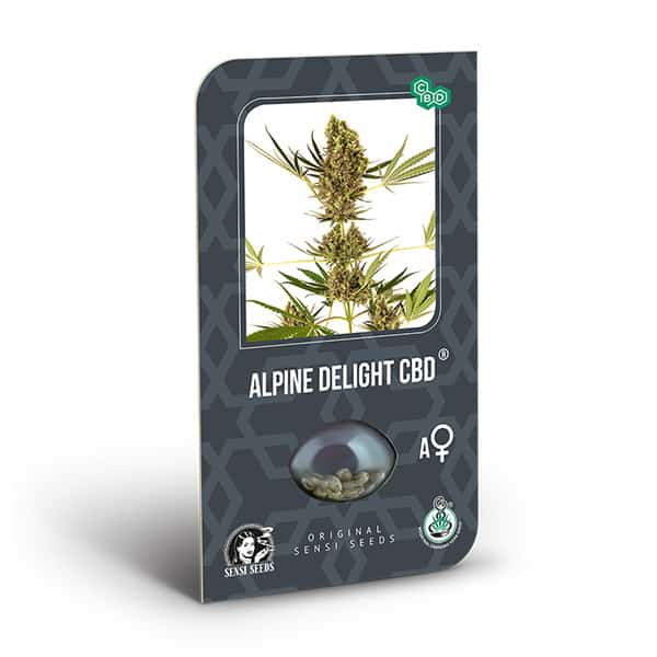 Buy Alpine Delight CBD Auto Cannabis Seeds from Sensi Seeds online at HollandsHigh - Fast & Discrete world wide shipping!
