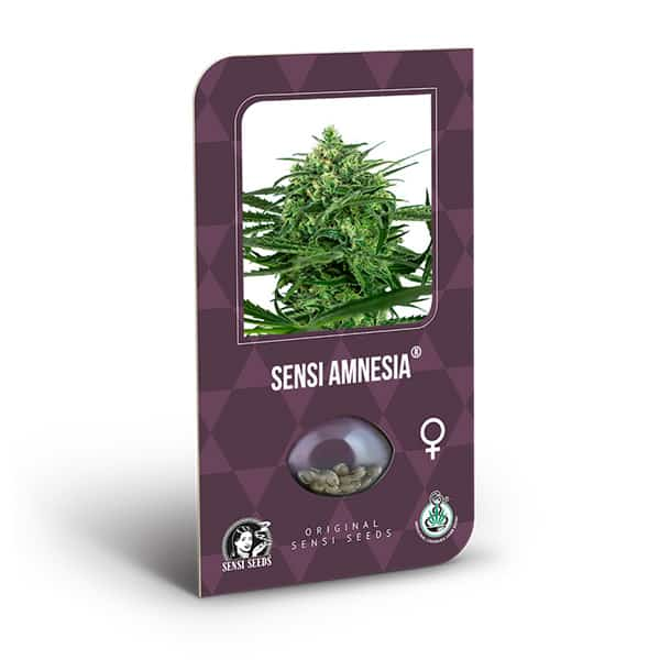 Buy Sensi Amnesia Cannabis Seeds from Sensi Seeds online at HollandsHigh! Fast & Discrete worldwide shipping! Check out all our Sensi strains!