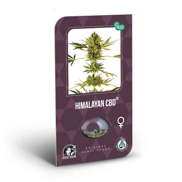 Buy Himalayan CBD Feminized Cannabis Seeds from Sensi Seeds online at HollandsHigh! Fast & Discrete worldwide shipping! Check out all our Sensi strains!