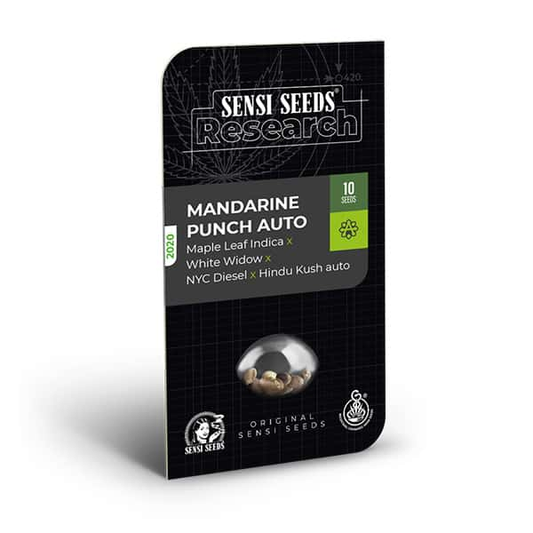 Buy Mandarine punch auto Feminized Cannabis Seeds from Sensi Seeds online at HollandsHigh! Fast & Discrete worldwide shipping! Check out all our Sensi strains!