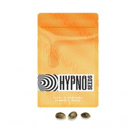 cream brulee hypno seeds