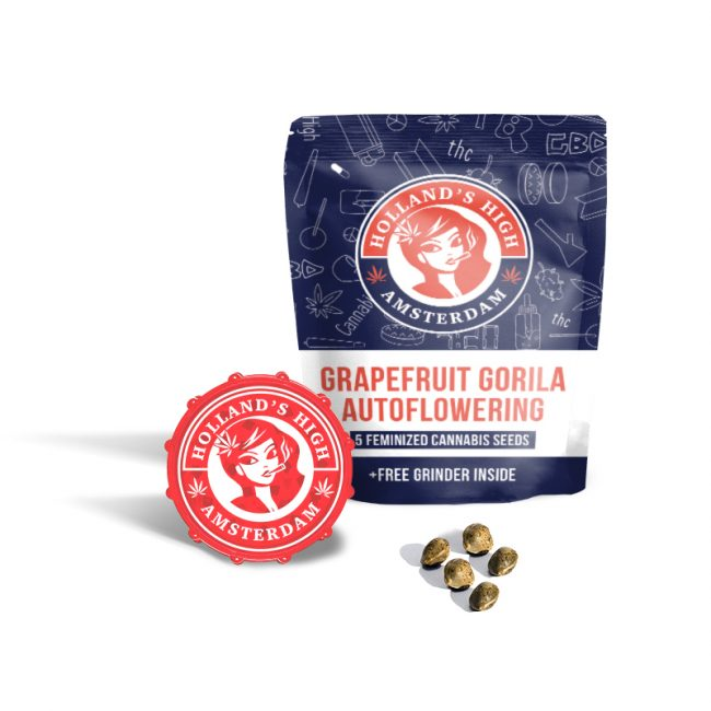 grapefruit gorila autoflowering