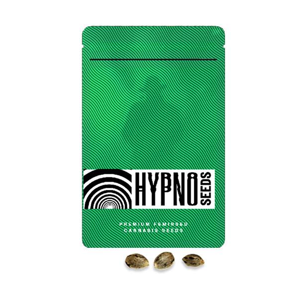 hazenberg hypno seeds